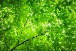 Normandie : Forêt